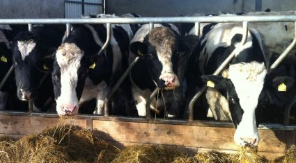 'Supply, demand factors will drive cattle prices in 2014 – Rabobank'