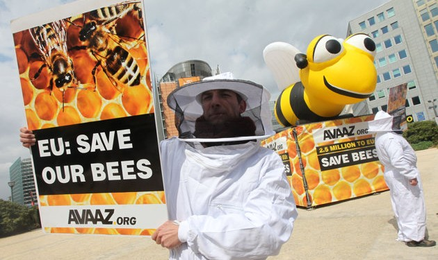 EU to ban bee pesticides from December