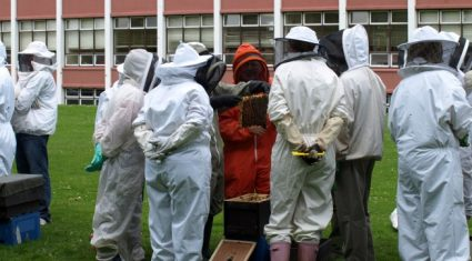 Pesticides in the frame for decline in bee population