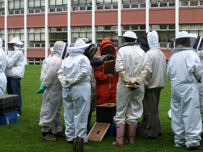 EU bees are not disappearing
