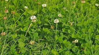 'Applying herbicide to reseed necessary in most cases'