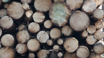€2.3 billion forestry and timber sector needs more species