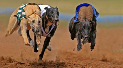 Irish greyhound industry lauded