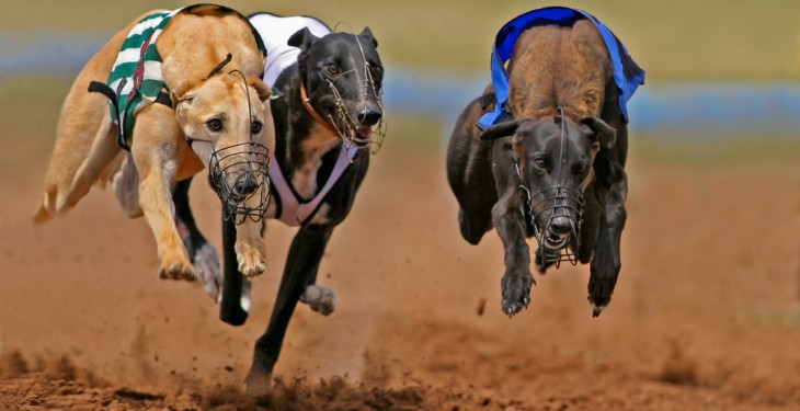 Irish greyhound industry lauded