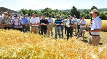 """This year's seed crops """"may exceed expectations"""""""