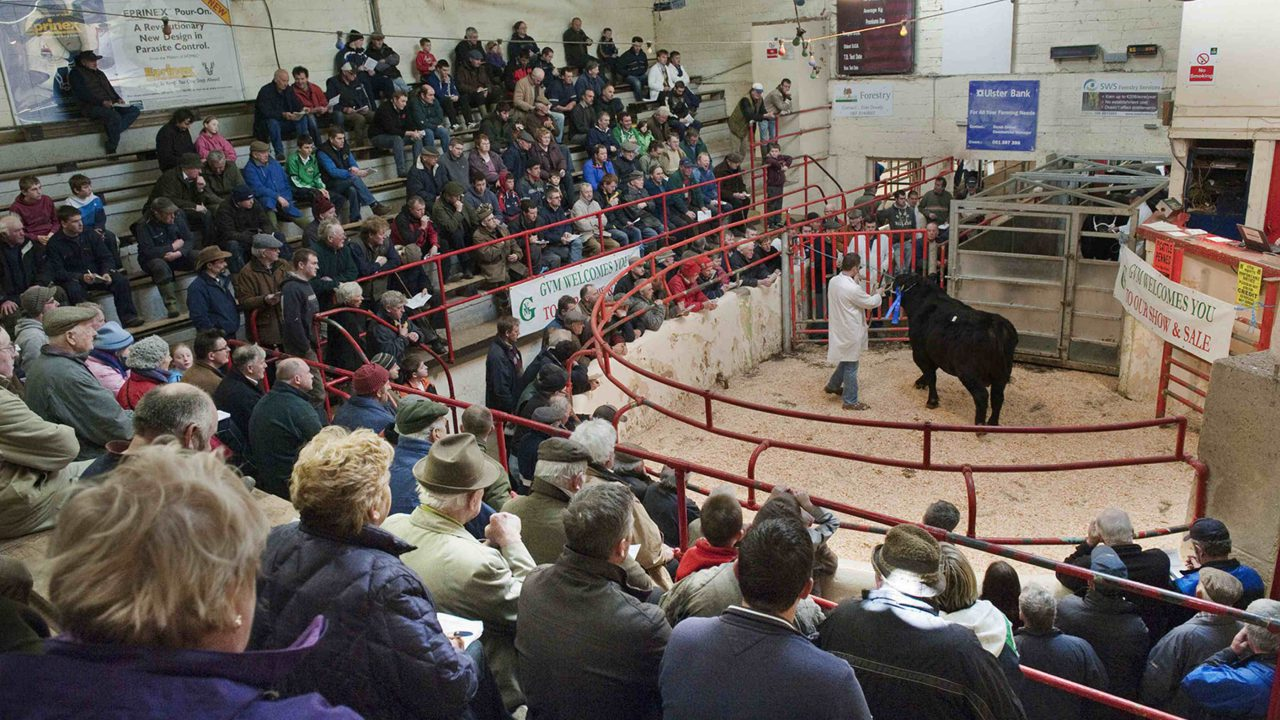 ICSA disappointed at efforts to cut beef price