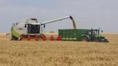 谷物利润率的全球产量下降