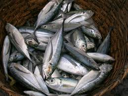 Trade sanctions on Iceland and Faroes mackerel fishing