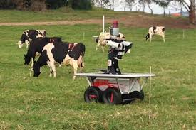 Robots to Bring the Cows Home