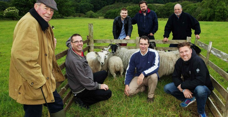 Sheep-herding with Tourism Ireland