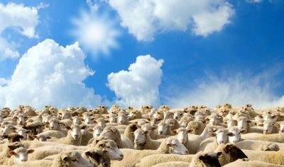 Slow growth for New Zealand lamb production