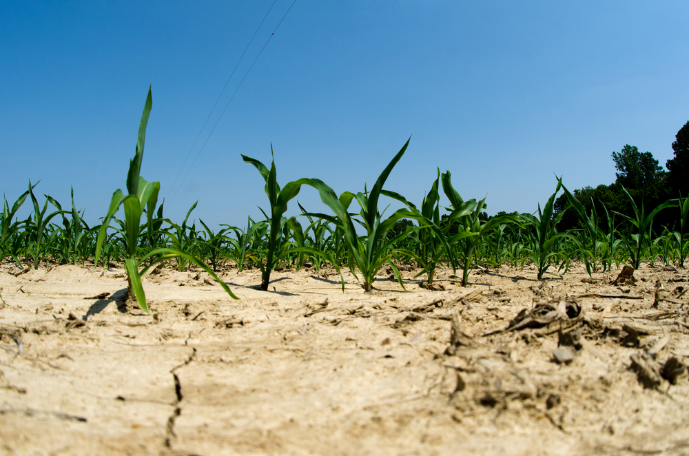 80% risk of 'mega drought' happening in the US study finds