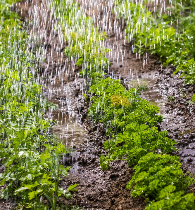 Wet and windy conditions for the weekend