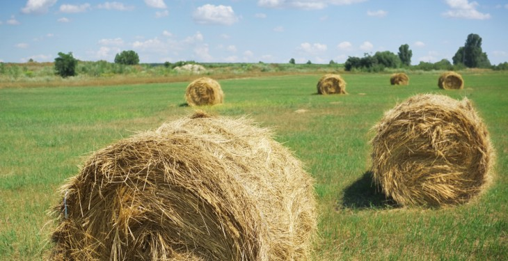 Teagasc census reports adequate fodder supplies for 140-day feeding