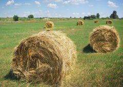 Fodder action group in search of 'southern comfort'