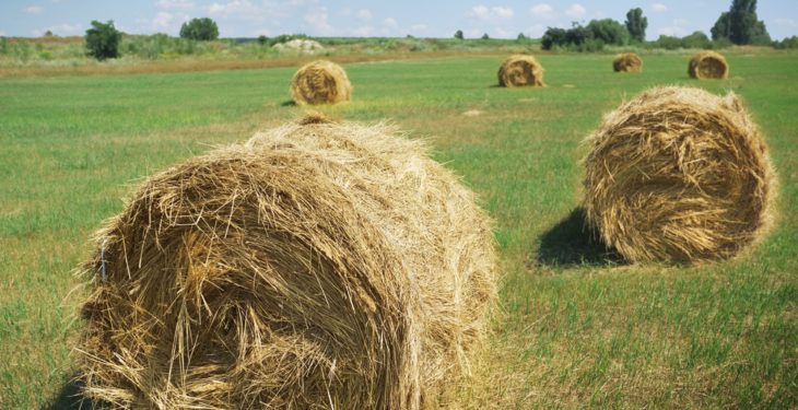 Imported fodder payments of €2.4m issued, more on the way