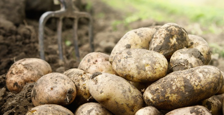 Farmers benefit from 144 per cent potato price increase