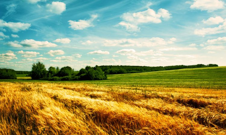 Growers urged to review 5-point arable farm 'bucket list' before Brexit