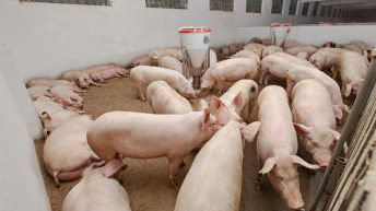 Chinese feed statistics described as 'interesting'
