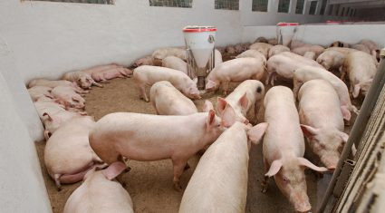 Global pork market moving into record territory