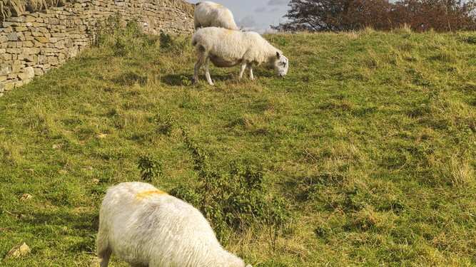 Upland management scheme needed