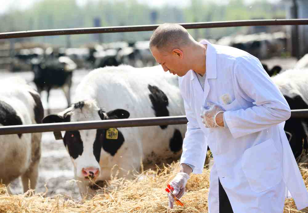 Banning antimicrobials could lead to 'serious animal health issues'