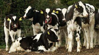 Vigilance is key with Johne's disease, NI expert