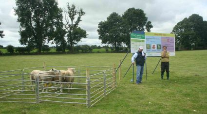 Importance of ram star index for Sheep stressed by Teagasc