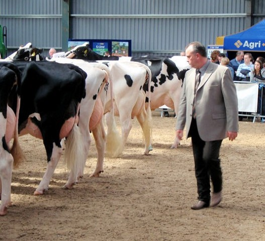 Top Canadian judge for Baileys champion cow competition