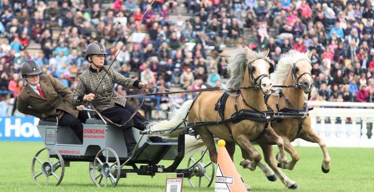 20,000 a day attend Dublin Horse Show