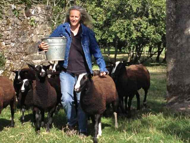 This week's farmer of the tweet Zwartbles Ireland
