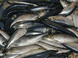 Fish sustainability in the spotlight