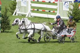 Fast and furious at the dublin horse show