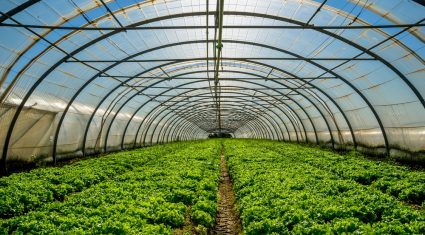 Horticulture advice for vegetables & fruit growers