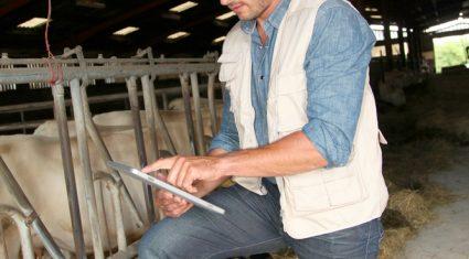 Latest updates from ICBF Gene Ireland maternal bull breeder programme