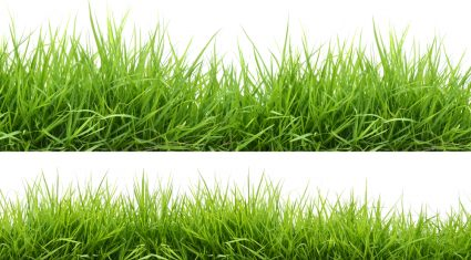 Grass growth remains strong as grazing conditions deteriorate
