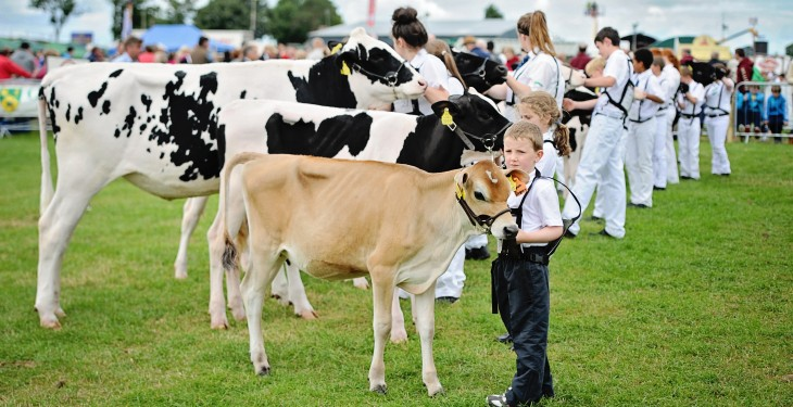 Tullamore Show judging results