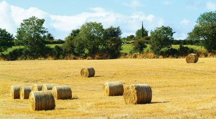 Review of the year: Farming crisis, fodder and debt levels