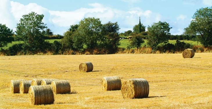 IFA welcomes fodder survey, calls on farmers to look at all options early on
