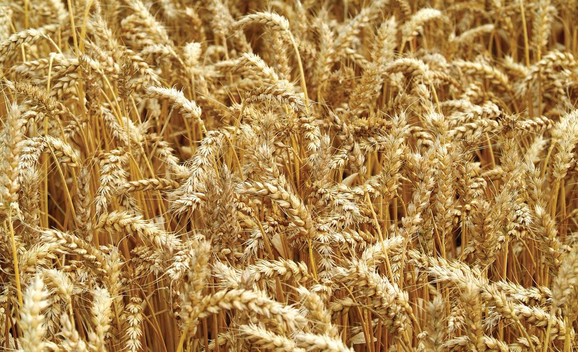 IFA calls for crop biotechnology advances
