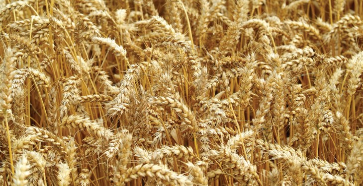 IFA calls for crop biotechnology advances