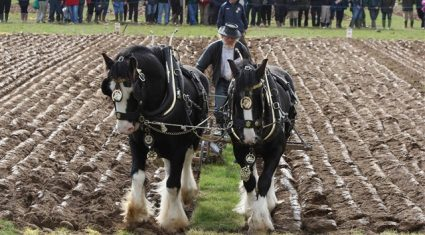 Lions set to roar at the Ploughing 2013