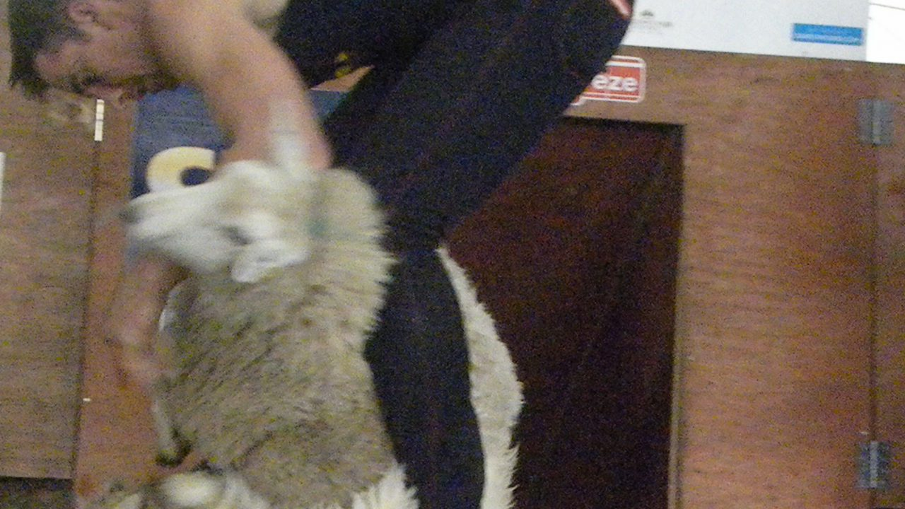 China continues to dictate Irish wool prices
