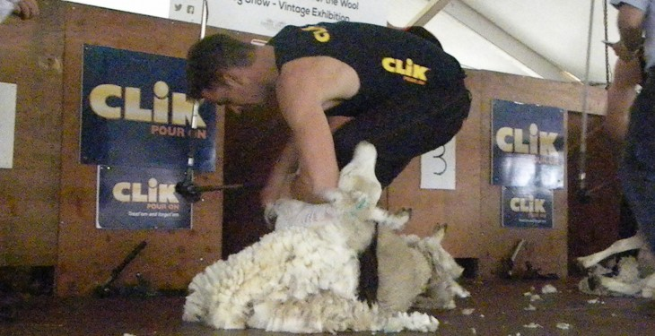 Golden Shears organisers secure 6,000 plus hoggets