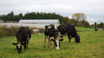 Lameness needs early detection