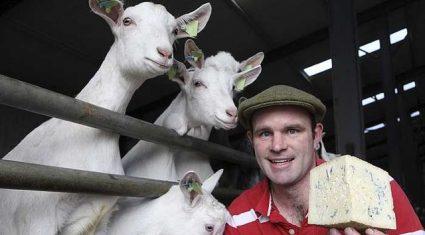 This Week's Farmer of the Tweet: Michael Finnegan