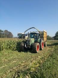 Maize silage, buyer beware