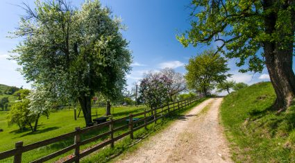 Grasstec: Increased appetite = increased grass utilisation = reduced soil damage