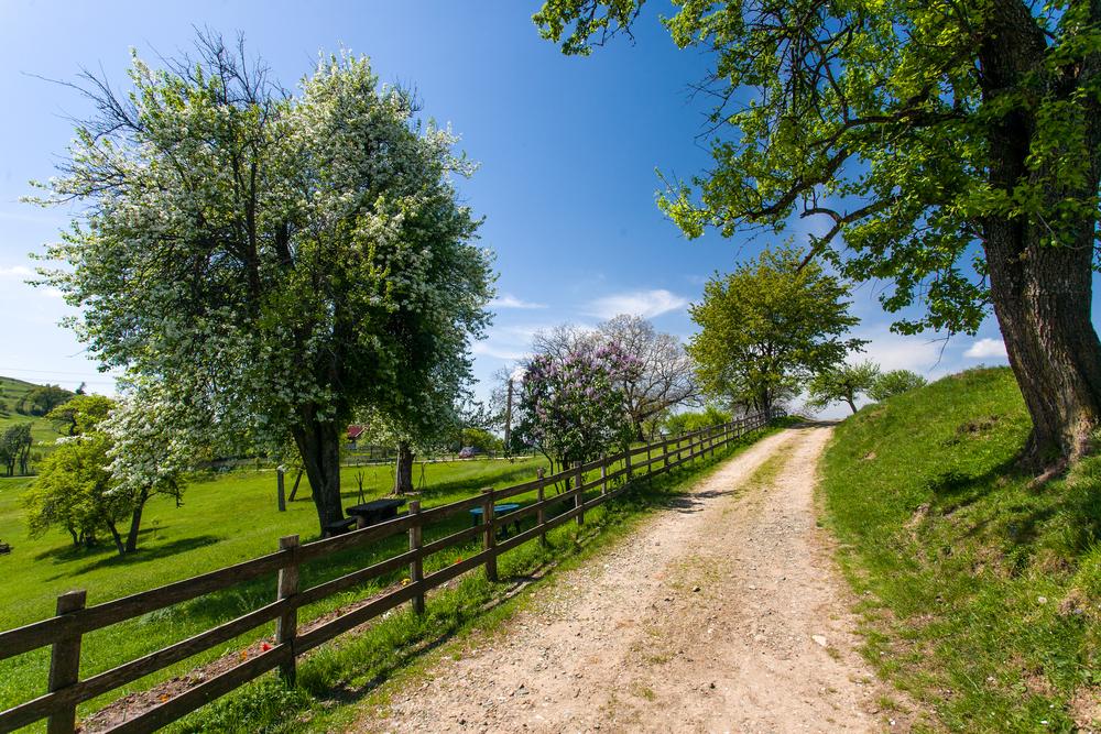 Rural hackney licenses under way to tackle isolation