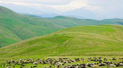 Farm management tips for September